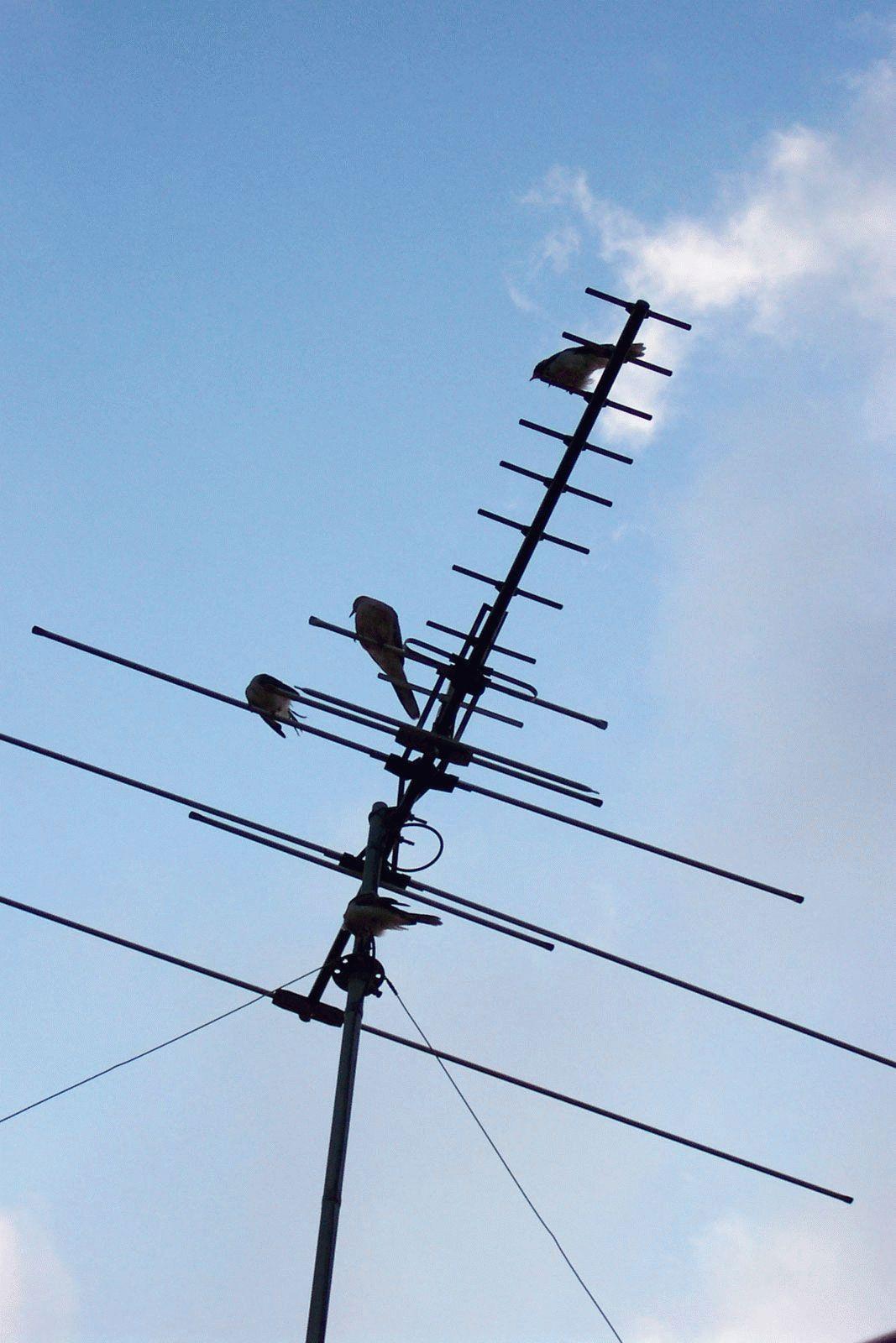 Kendi elleriyle TV anteni - basit ve uygun fiyatlı
